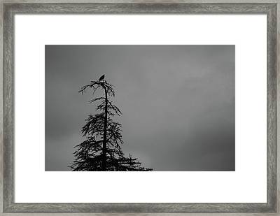 Crow Perched On Tree Top - Black And White Framed Print