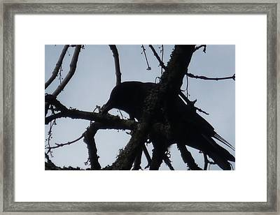 Crow Silouette Framed Print by Dawna Raven Sky