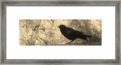 Crow Framed Print by Tracy Fallstrom