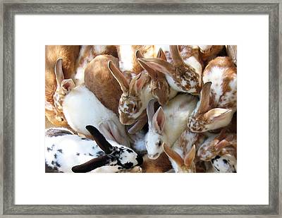 Crowd Of Rabbits Framed Print