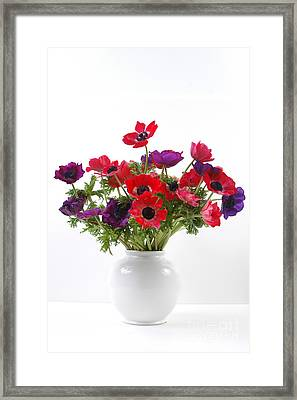 crown Anemone in a white vase Framed Print by Ilan Amihai