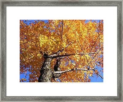 Crown Fire Framed Print by Dave Martsolf
