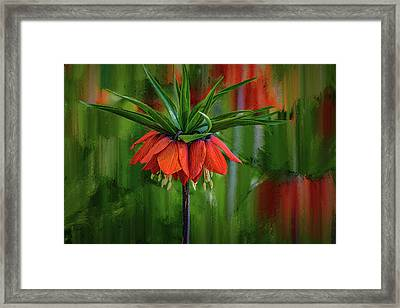 Crown-imperial Abstract #h5 Framed Print
