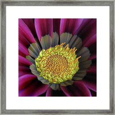 Framed Print featuring the photograph Crown Of Pollen by David and Carol Kelly