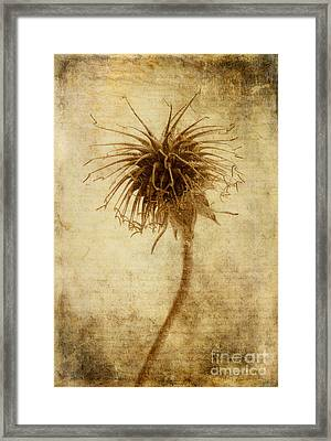 Crown Of Thorns Framed Print by John Edwards