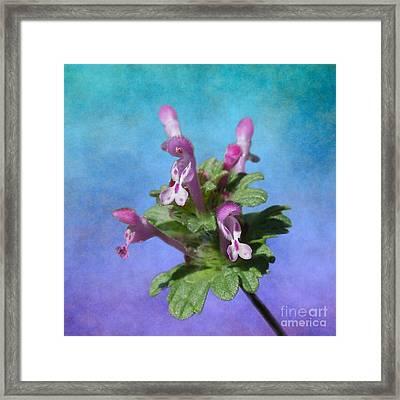 Crown Vetch Flower Stalk Framed Print