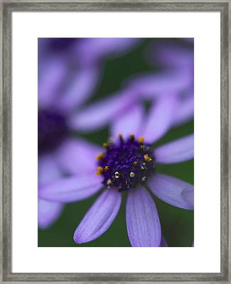Crowned With Purple Framed Print