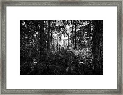 Crows Call Framed Print