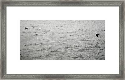 Crows In Flight Framed Print
