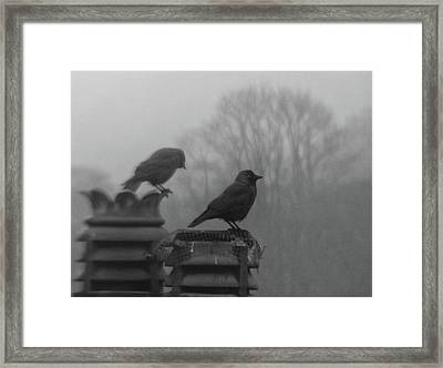 Crows On Chimney Tops Framed Print by Philip Openshaw