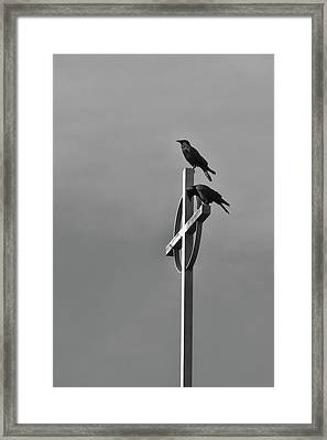 Framed Print featuring the photograph Crows On Steeple by Richard Rizzo