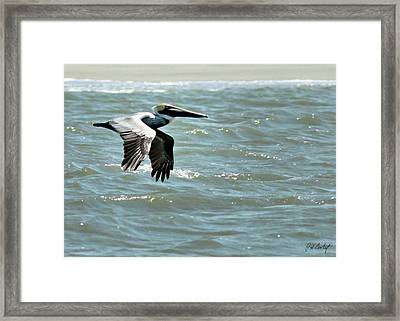 Cruising Framed Print by Phill Doherty