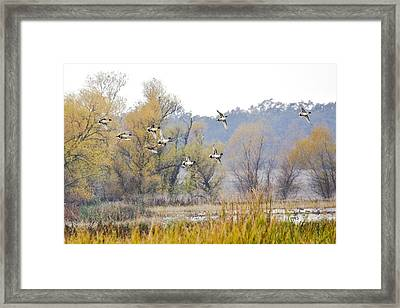 Cruising The Pond Framed Print by Charlie Osborn