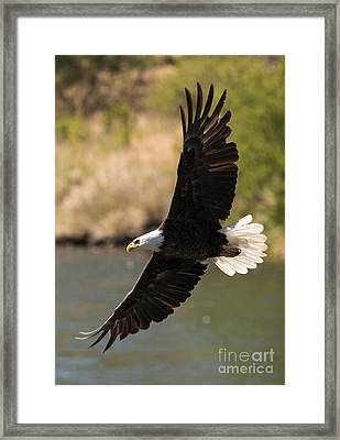 Cruising The River Framed Print by Mike Dawson