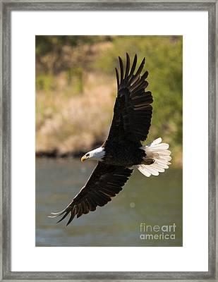 Cruising The River Framed Print