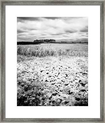 Crunchy Marsh Framed Print
