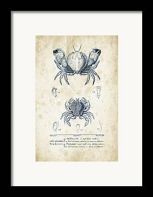 Crayfish Framed Prints