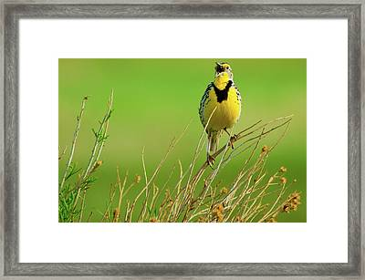 Framed Print featuring the photograph Crying Out II by John De Bord