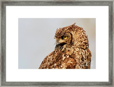 Crying Spotted Eagle-owl  Framed Print by Nick Biemans