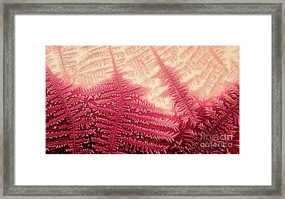 Crystal Of Ammonium Chloride Framed Print
