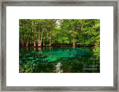 Crystal Blue Manatee Spring Waters Framed Print by Adam Jewell