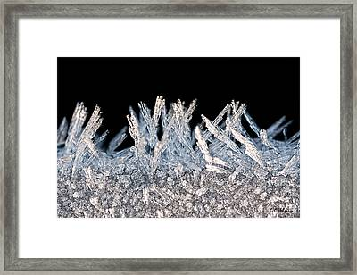 Crystal Forest Framed Print by Christopher Holmes