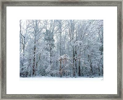 Crystal Forest Framed Print by Jeanette Stewart