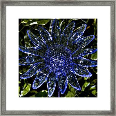 Crystal Garden Sunflower Framed Print by David Patterson