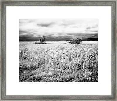 Crystal Grass Framed Print