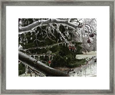 Crystal Jaws Framed Print