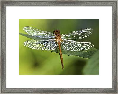 Crystal Wings Framed Print