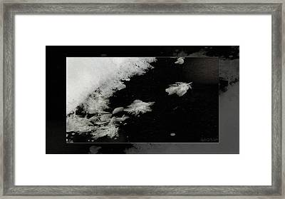 Crystalline Flight. Framed Print by Doug Bratten