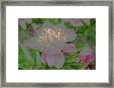 Crystalline Flower Framed Print by Don Wright