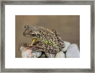 Framed Print featuring the photograph Cuban Cutie by Donna Kennedy