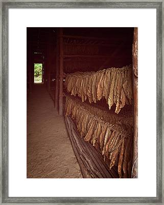 Framed Print featuring the photograph Cuban Tobacco Shed by Joan Carroll