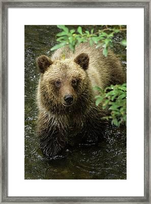 Cubby Framed Print