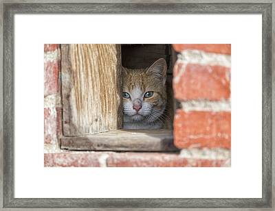 Cubby Cat Framed Print