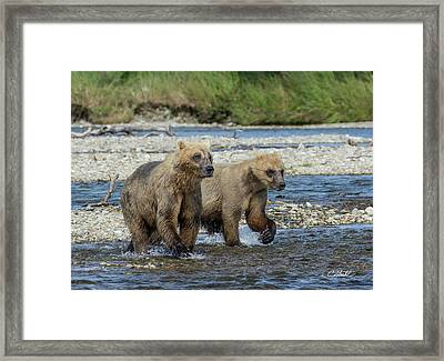 Framed Print featuring the photograph Cubs On The Prowl by Cheryl Strahl