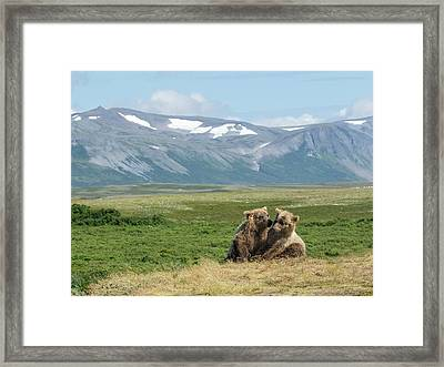 Framed Print featuring the photograph Cubs Playing On The Bluff by Cheryl Strahl
