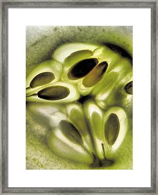 Cucumber Framed Print by Tom Druin