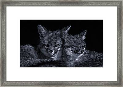 Cuddle Buddies  Framed Print