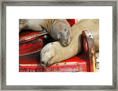 Cuddle Buddies  Framed Print by Shoal Hollingsworth