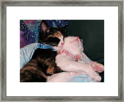 Framed Print featuring the photograph Cuddle Buddy by Rebecca Wood
