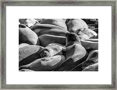 Cuddle Puddle Framed Print