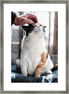 Framed Print featuring the photograph Cuddles by Laura Melis