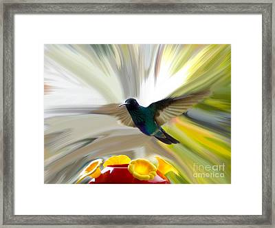 Cuenca Hummingbird Series 1 Framed Print by Al Bourassa