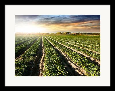 Fertilize Framed Prints
