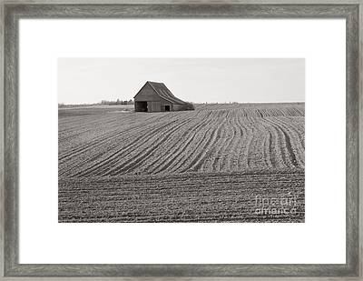 Cultivation Framed Print by Lionel F Stevenson