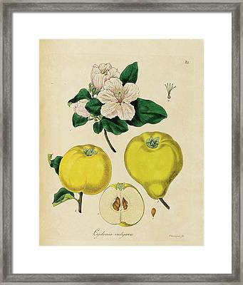 Cultivation Plants  Framed Print by Botany