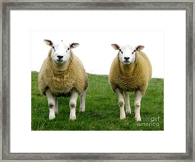 Cumbrian Sheep Framed Print by Ruth Hallam